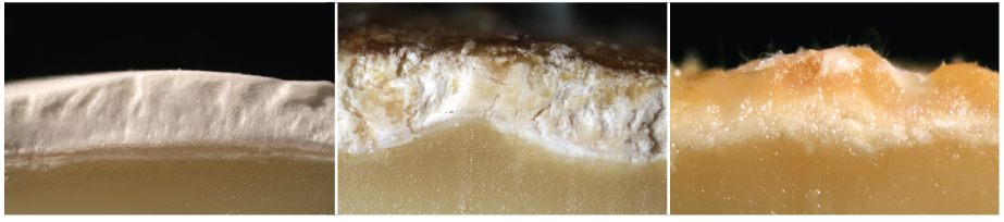 Naturally aged cheeses develop three types of rinds on their surfaces: bloomy rinds (left), natural rinds (middle), washed rinds (right).