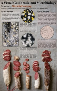 A Visual Guide to Salami Microbiology