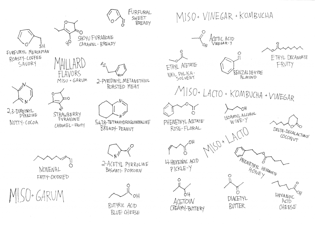 An illustration from Arielle and Lars's Fermentation Handbook